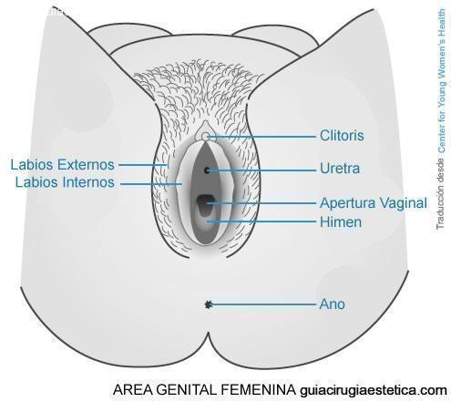 Area Genital Femenina - HIMEN