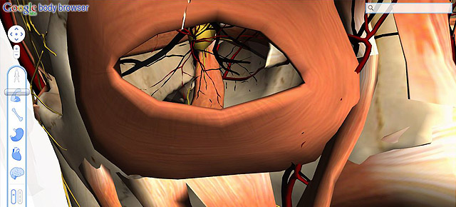Atlas de Anatoma 3D - Google Body Browser