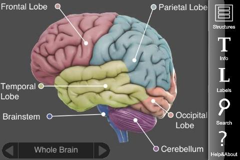 3D Brain - App de educación médica